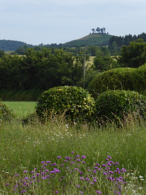 Ruth's meadow view