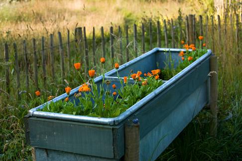 Trough planter for salads