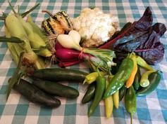 Week 14: Sweet Corn, Anaheim peppers and Hot Hungarian Wax peppers, Red and White Fresh Onions, Slicing Cucumbers, Swiss Chard, Cauliflower, Sweet Dumpling Squash
