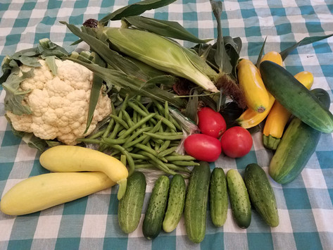 Week 7: Cauliflower, Sweet Corn, Slicing Cucumbers, Pickles, Summer Squash, Roma Tomatoes, Green Beans, Zucchini