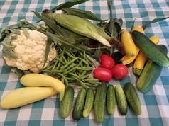 Week 7: Cauliflower, Sweet Corn, Slicing Cucumbers, Pickles, Summer Squash, Roma Tomatoes, Green Beans, Zucchini