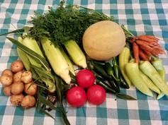 Week 10: Carrots, Sweet Banana Peppers, Sweet Corn, Slicing Tomatoes, Muskmelon, Yukon Gold Potatoes, Jalapenos