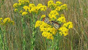 butterfly-monarch.jpg