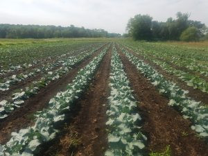 CSA Weekly Update for July 24th-27th!