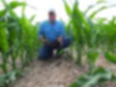 notill-corn.jpg