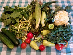 Week 8: Cauliflower, 4th of July Specialty Tomatoes, Gypsy Peppers, Sweet Corn, Kale, Trunip Greens, Slicing Cucumbers, Yellow Wax Beans & Green Beans mix