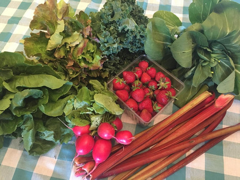 Week 1: Strawberries, Rhubarb, Radishes, Bok Choy, Kale, Green Romaine, Red Leaf Lettuce