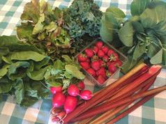 Week 1: Strawberries, Rhubarb, Radishes, Bok Choy, Kale, Green Romaine, Red Leaf Lettuce