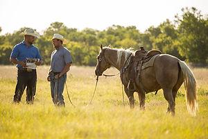 Petersek-and-horse056.jpg