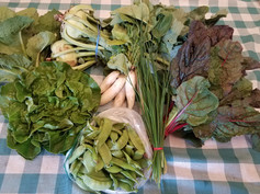 Week 2: Swiss Chard, Green Buttercrunch lettuce, Kohlrabi, Snow Peas, Bunch of Chives, White Icicle Radishes, Green Romaine lettuce