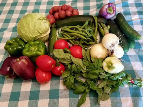 Week 9: Cabbage, Purple, Green and White Bell Peppers, Fresh Onions, Roma Tomatoes, Slicing Tomatoes, Basil, Green Beans Zucchini, Slicing Cucumbers
