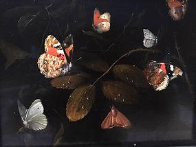 papillons .jpg