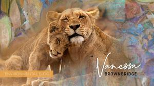 Conversation Africa Conservation World