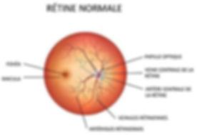 retine normale 2.JPG