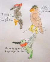 """Ryan C.   """"Birds"""""""