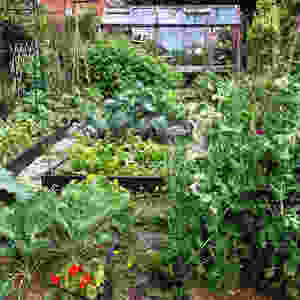 Allotment Garden AllotMe Case Study - Becky Searle @sow_much_more