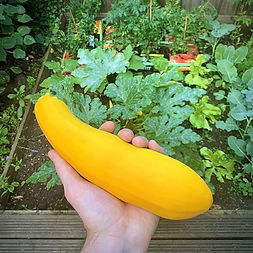 How to Grow Courgettes