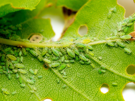 Common Plant Pests Found In Your Home & How To Deal With Them