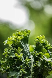 How to Grow Kale