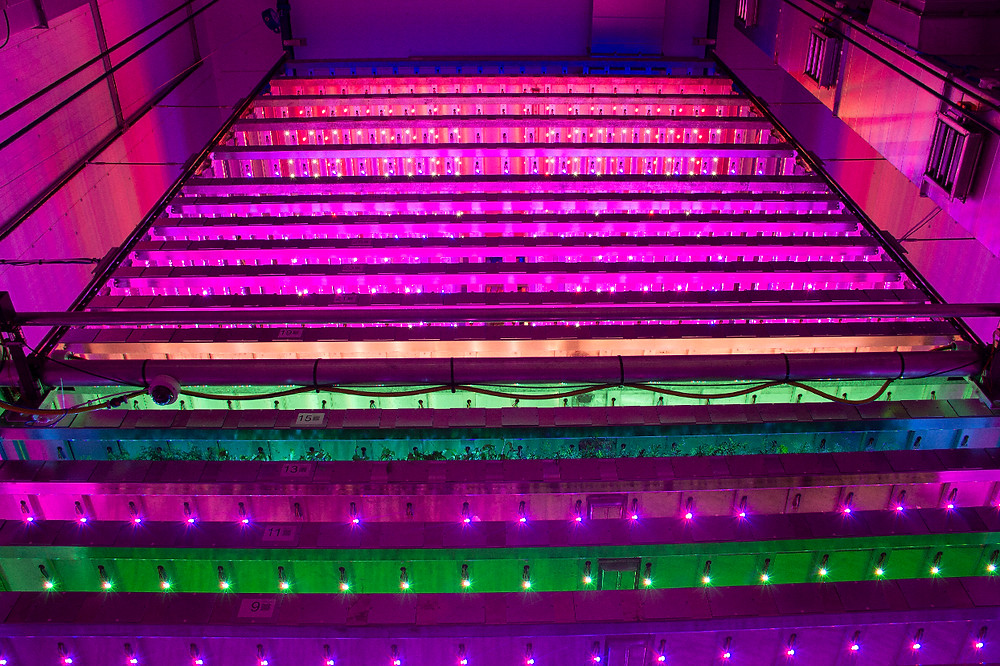 AllotMe Vertical Farm LED grow lights Integrated Growth Solutions