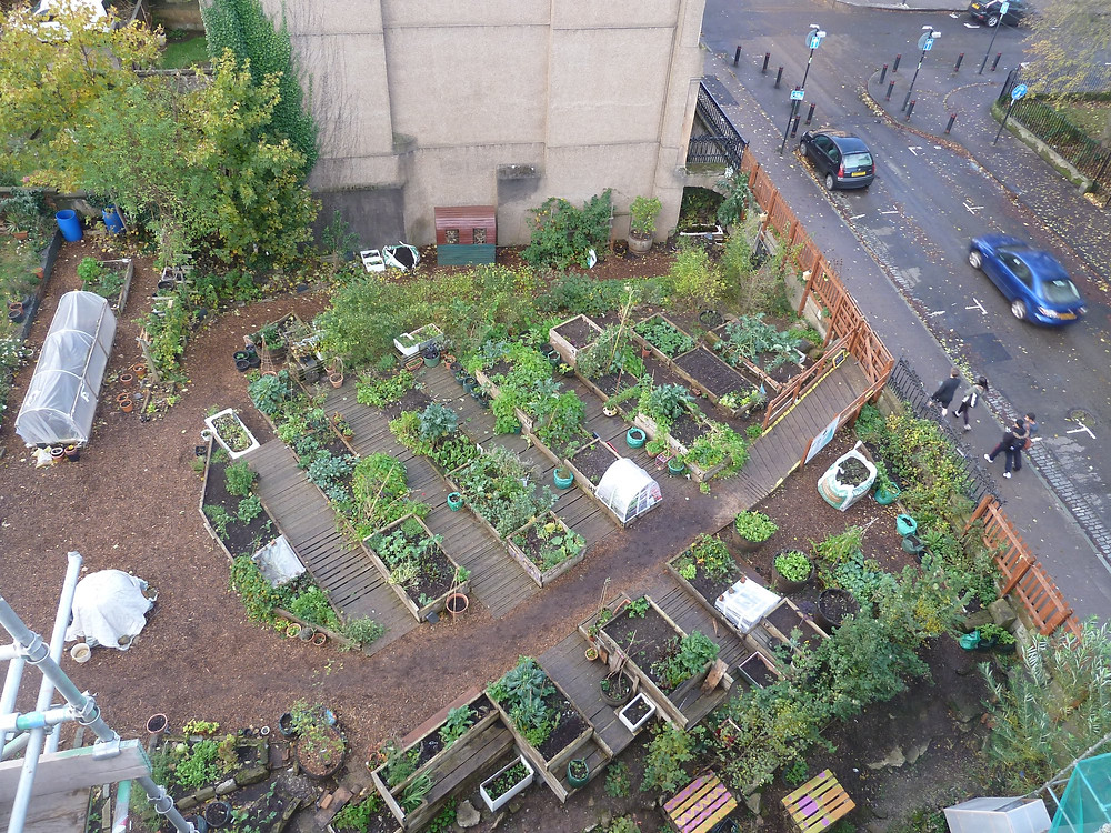 AllotMe case study: Woodlands Community Garden, Glasgow. Urban Agriculture.