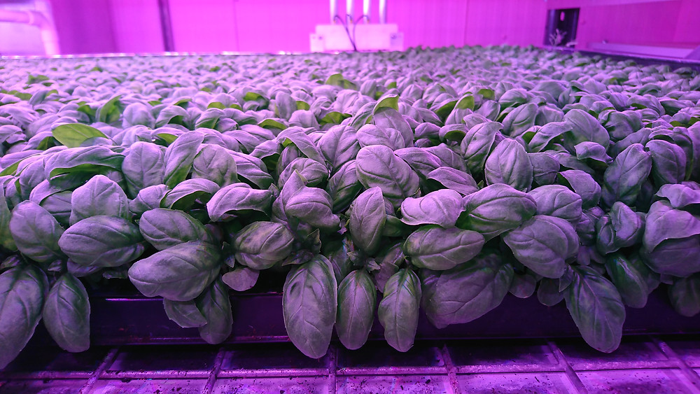 AllotMe Case Study Vertical Farm Integrated Growth Solutions
