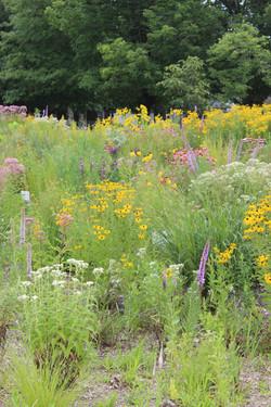 Peace & Nature Garden