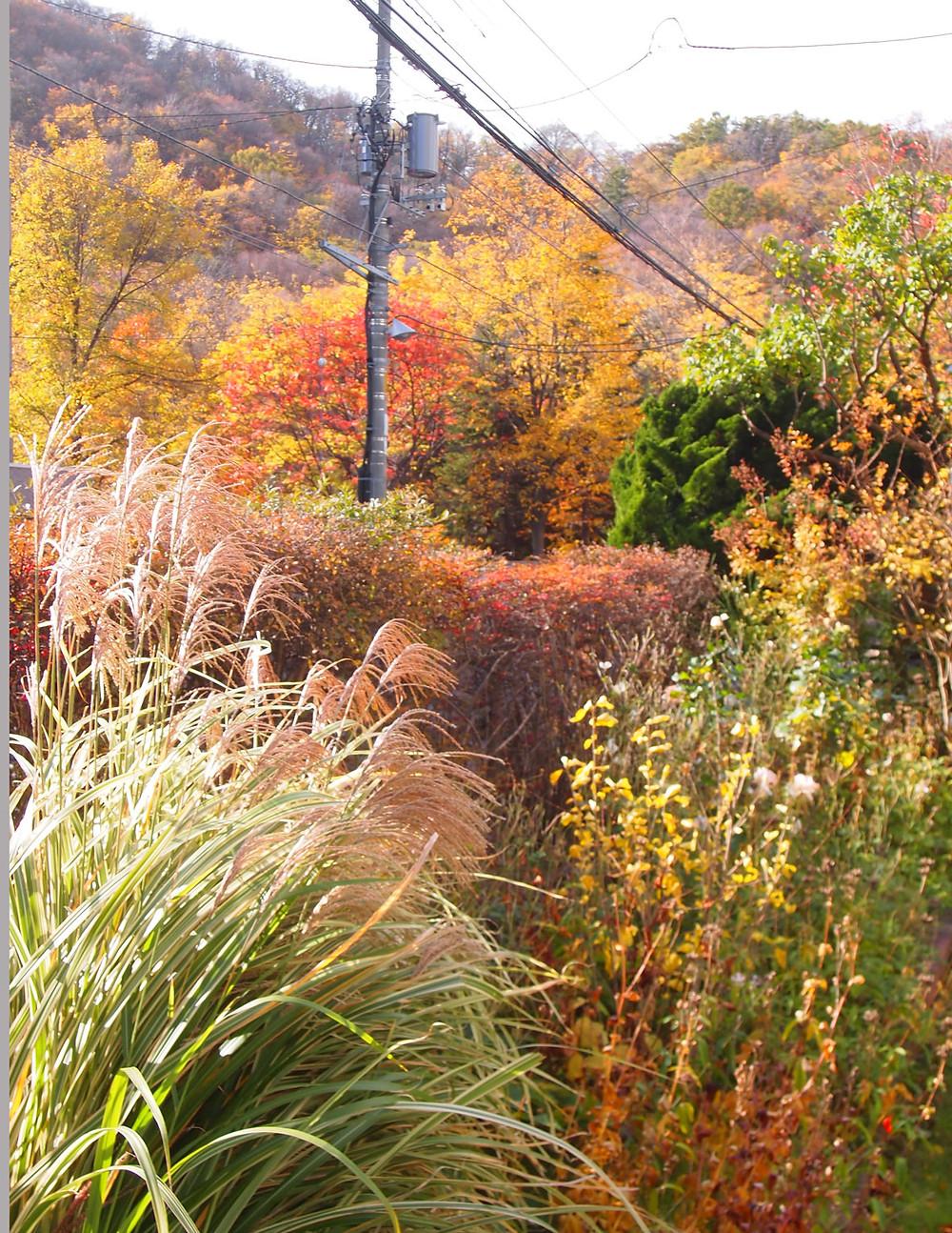 庭からの円山