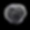 truffe noire perigord