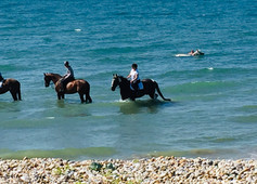 Horses cooling off in the sea