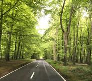 Beautiful drive to Goodwood