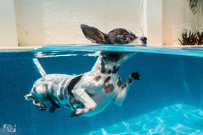 uw dogs drift mx.jpg