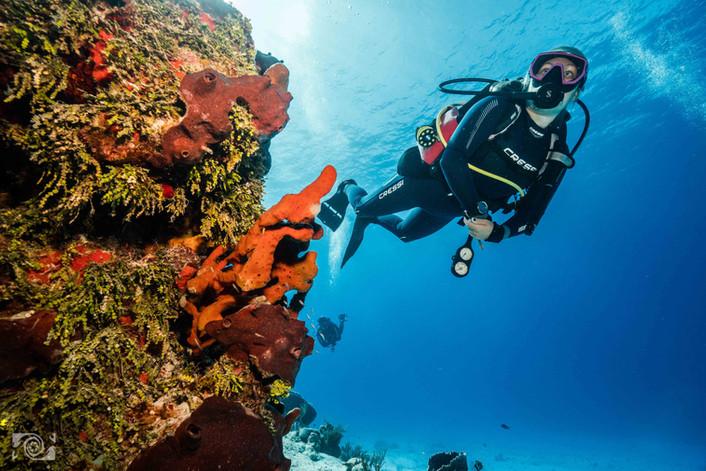 cozumel best reef.jpg