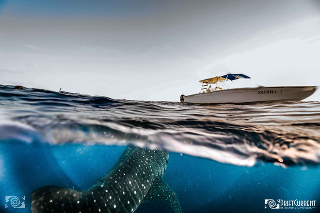 whalesharktoursmx.jpg