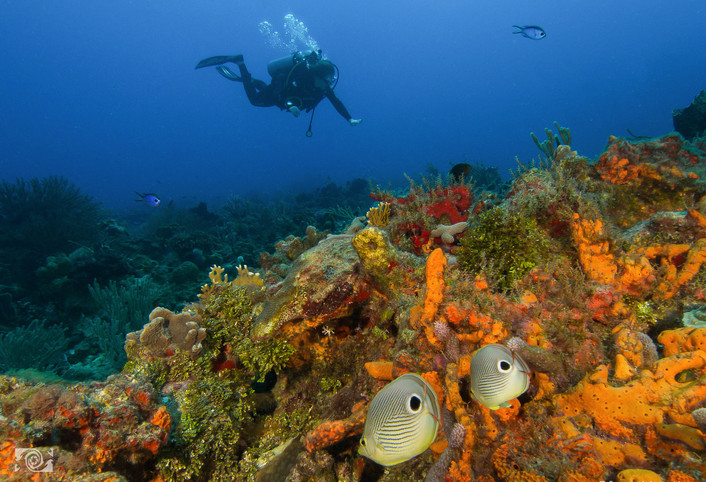 divinginmexico.estherwhite.jpg