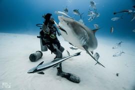 shark feeding mexico.jpg