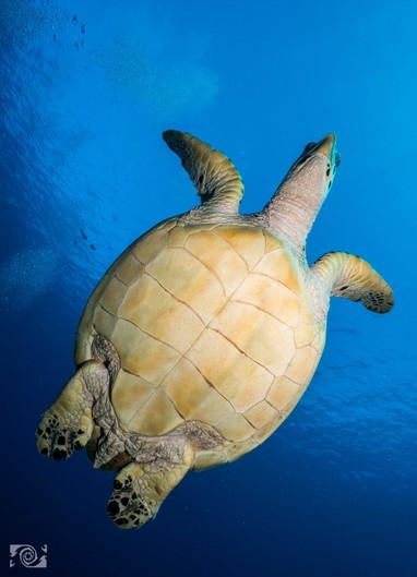 swim with tourtles.jpg
