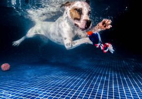 foto perro abajo agua.jpg