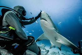 shark feeding playa del carmen.jpg