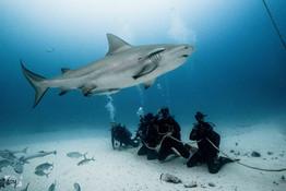 playa del carmen sharks.jpg