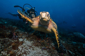 tourtle reef dive pdc.jpg