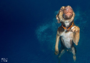 fotos perros en el agua rivera maya