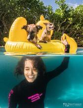 dogs underwater playadelcarmen.jpg