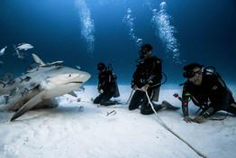 shark dive deep.jpg