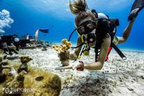 coralrestorationcozumel.jpg