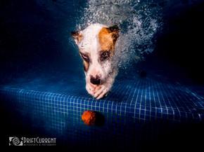 sos el arca. dogs underwater