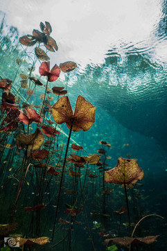 underwater cenote.jpg