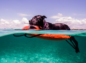 perros agua foto.jpg