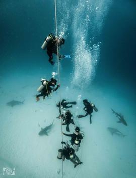 shark dive mexico.jpg