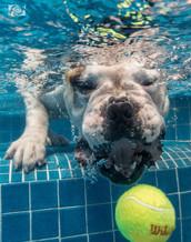 perros bajo el agua. playa del carmen